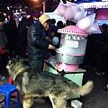 弘大遇見雪橇犬