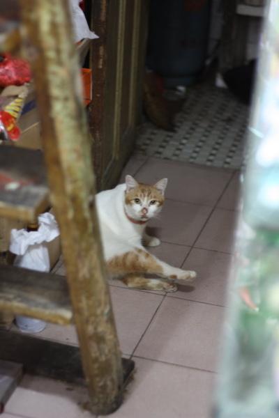 雜貨行的橘白貓