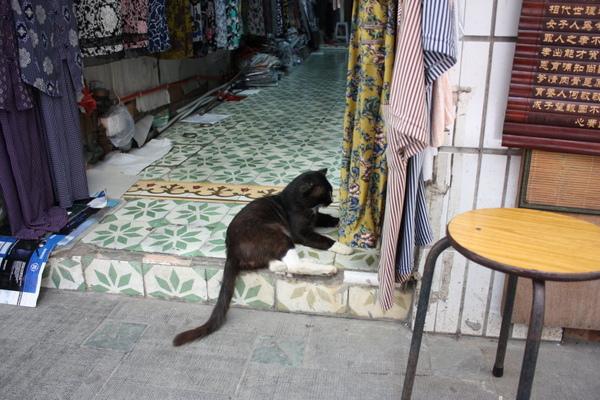 服飾店的貓