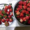 草莓_6552.jpg