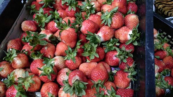 草莓_9666.jpg