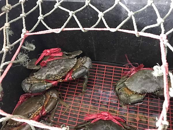阿美螃蟹_191026_0030.jpg