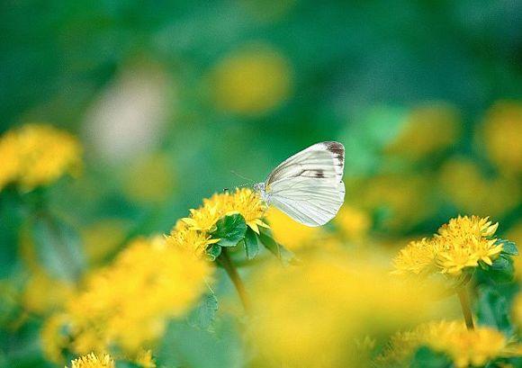 [wall001_com]_spring_flower_2007_163130.jpg
