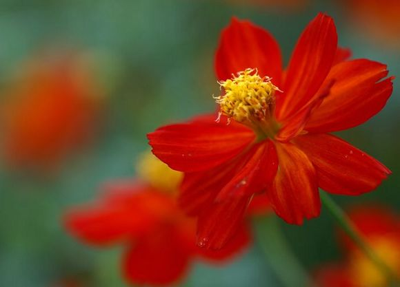 wallcoo_com_Digital_Flower_Photo_360.jpg