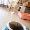 6.22 柴:我的碗裡有東西!