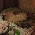 11.13 兩個窩再一起睡覺唷~