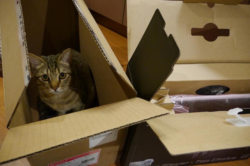 我在開箱硬要湊過來玩