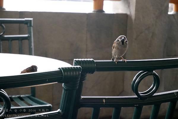 好肥的麻雀