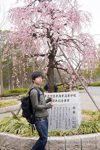 有棵梅花樹