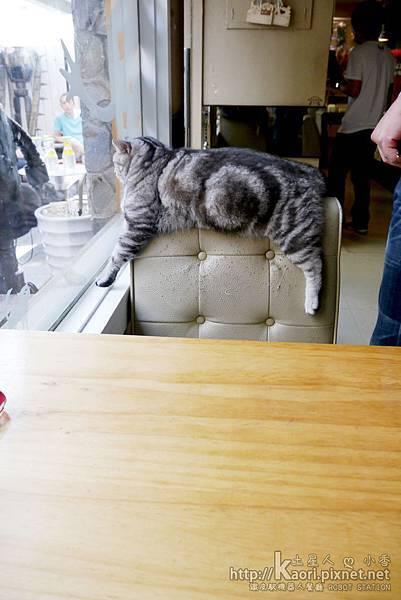 貓咪馬上來霸占位置XD