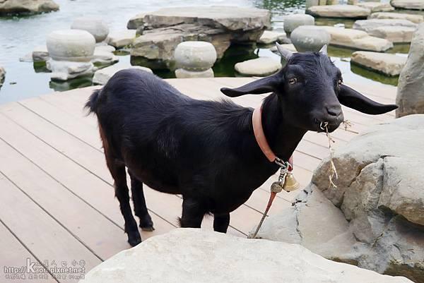 黑羊咩咩...