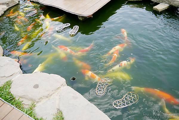小中庭裡的魚池