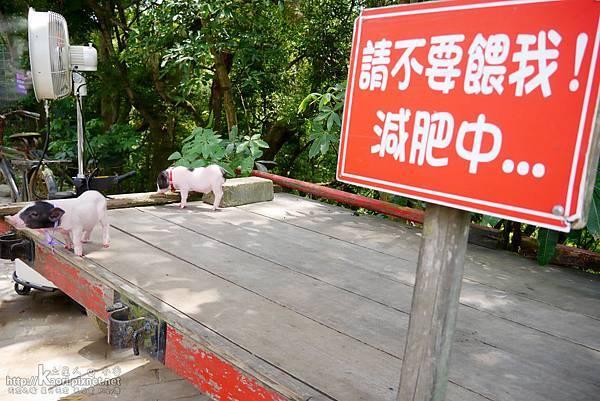 減肥中的小豬