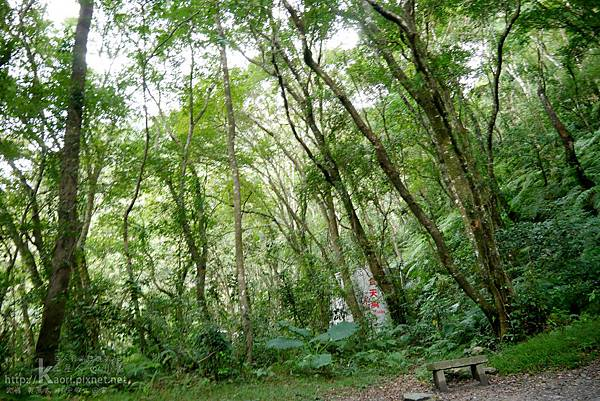 這裡真的是森林