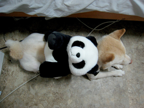 是熊貓唷XD