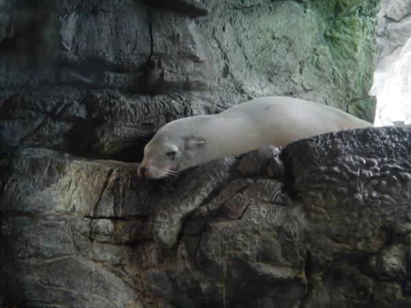 這隻是海狗?