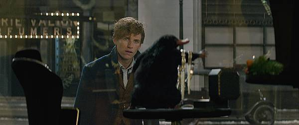 Fantastic-Beasts-and-Where-to-Find-Them-51
