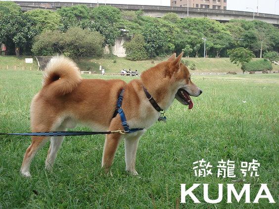 KUMA04.jpg