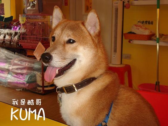 KUMA02.jpg