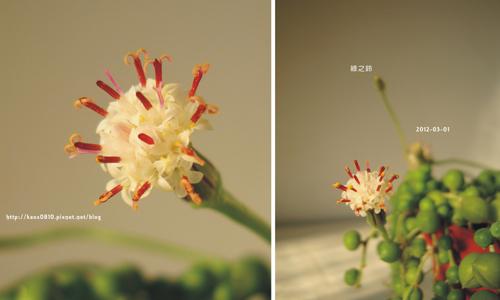 綠之鈴A-2012-03-01