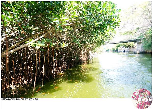 四草綠色隧道 台南府城 台江生態 紅樹林