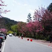 2013-02-23 武陵農場 (5)
