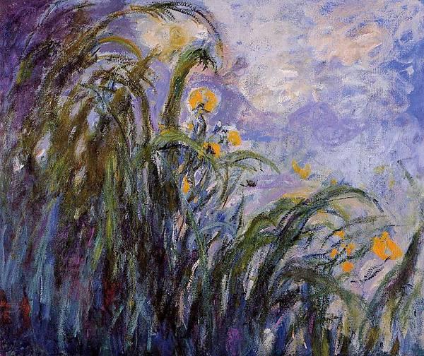 yellow-irises-