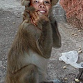 人面猴....改圖功力太猛了...