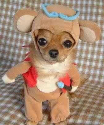 變裝狗系列2