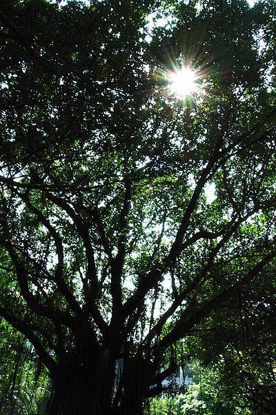 今天的顏色由太陽和綠樹所主宰