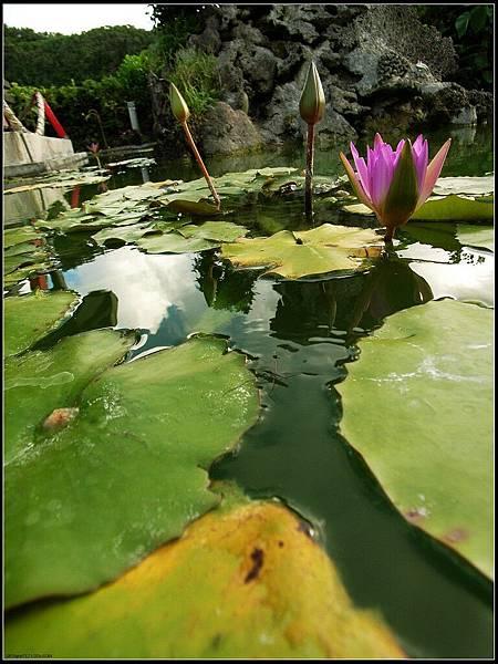 7 - 孤單的兩人環島 -32 飯店前面的水池,擱淺的水黽