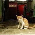 2 - 漆彈 - 16 - 無聊拍的貓