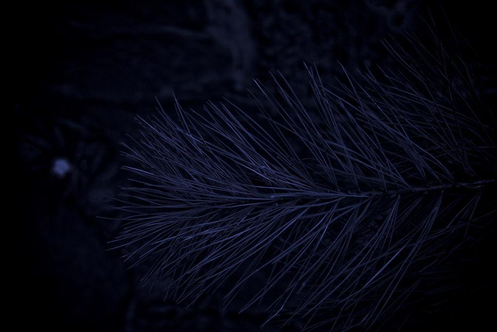 20100830-P1050870
