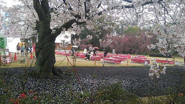 櫻花_170408_0003.jpg