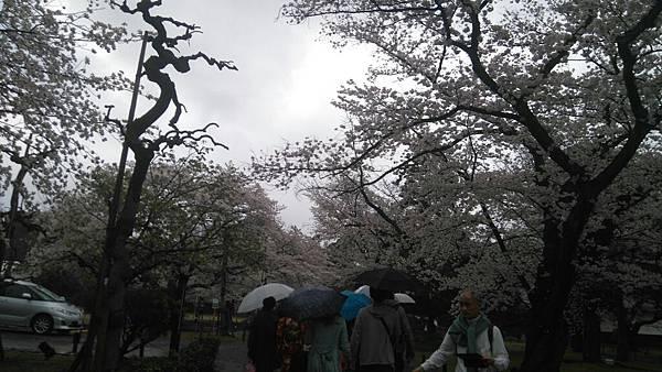 櫻花_170408_0007.jpg