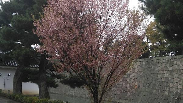 櫻花_170408_0016.jpg