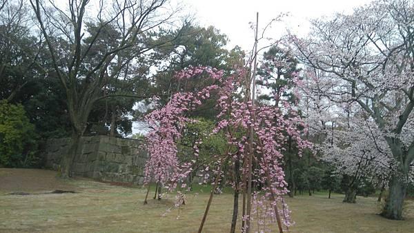 櫻花_170408_0028.jpg