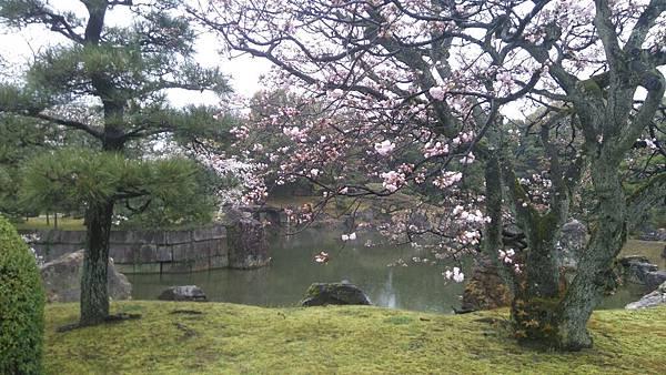 櫻花_170408_0050.jpg