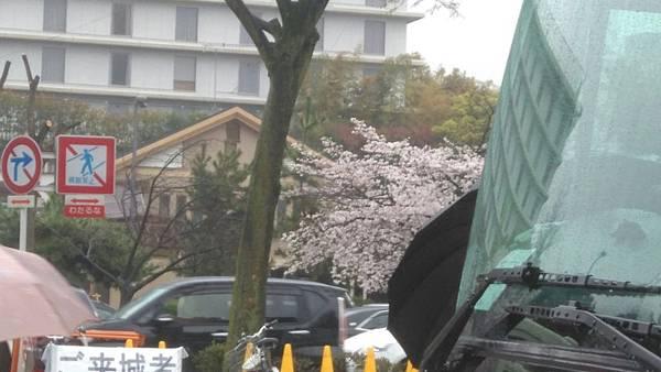 櫻花_170408_0061.jpg