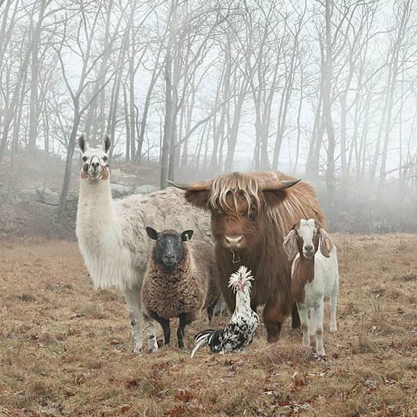 動物團.jpg