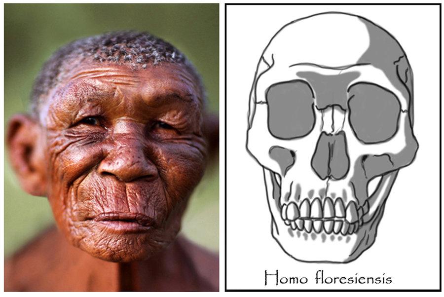 homo_floresiensis___female__hobbit