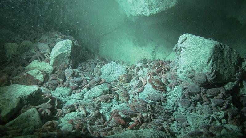 硫磺怪方蟹88