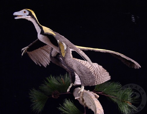 Microraptorside