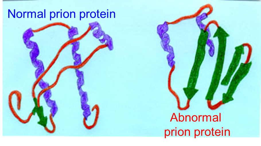 Prion%20Proteins