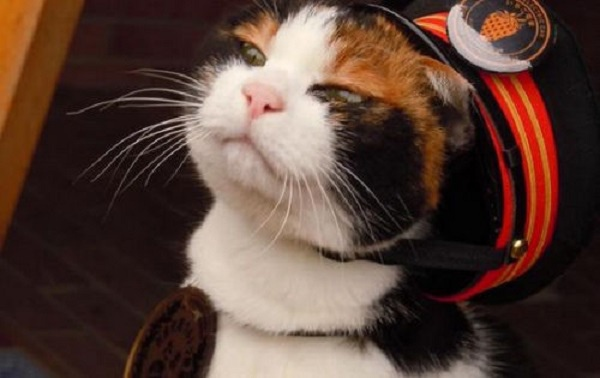 小玉貓站長1