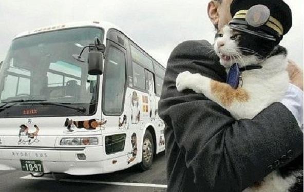小玉主題巴士