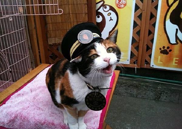 小玉貓站長8