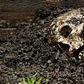 body_farm_skull-70