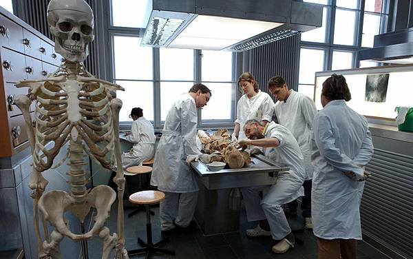 Dissection-2