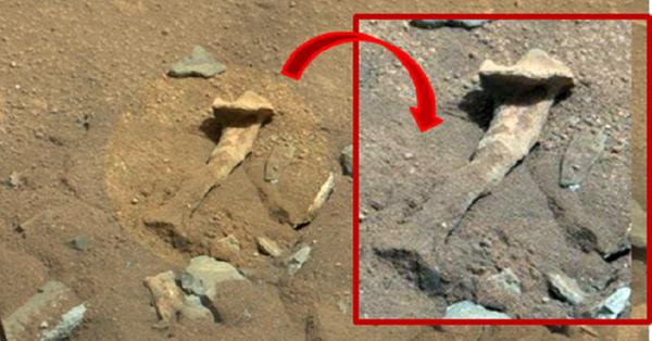 THIGH-BONE-MARS1
